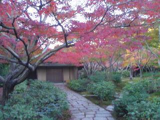 日本庭園 茶室「庵・万里庵」_0008_0001.JPG