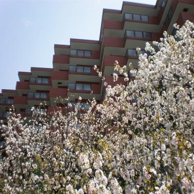 桜とウェルネスの森伊東