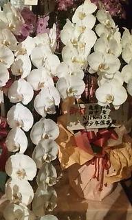 ドリームボーイズ 花