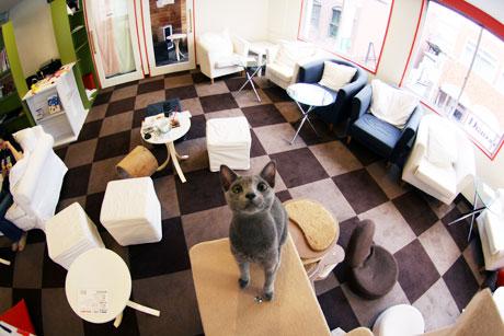 cat cafe calico キャット カフェ きゃりこ 猫カフェ 猫喫茶 ネコ