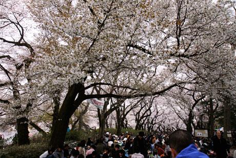 吉祥寺 花見 in 井の頭公園(井の頭恩賜公園)2010