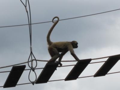 空中散歩(?)する猿