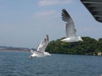 バイク旅(松島港)1