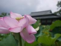バイク旅(宇佐神宮)