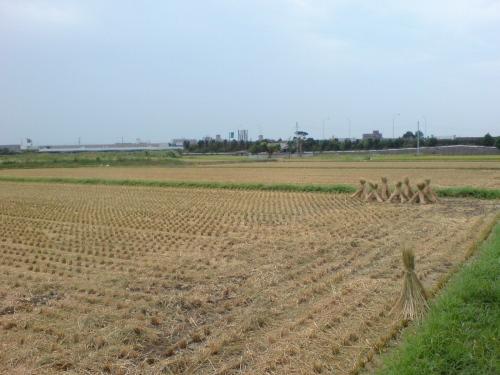 稲刈りあとの田圃