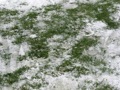 雪かき01芝
