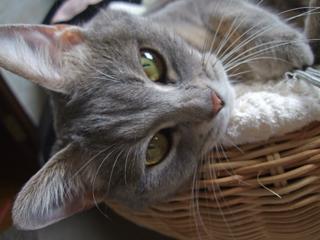 猫ベッド再び3