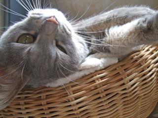 猫ベッド再び4