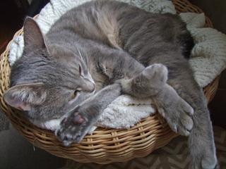 猫ベッド再び5
