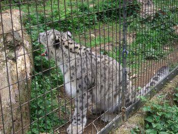 2014動物園_03