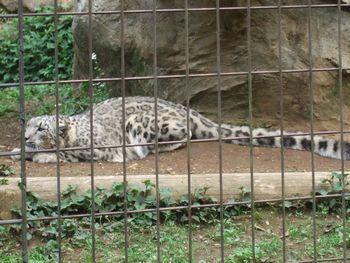 2014動物園_04