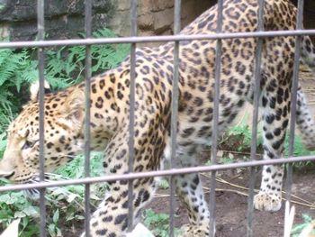 2014動物園_08