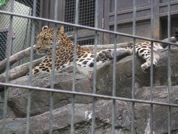2014動物園_09