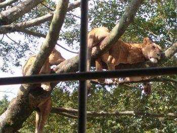 2014動物園_10