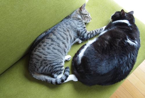 眠り猫01