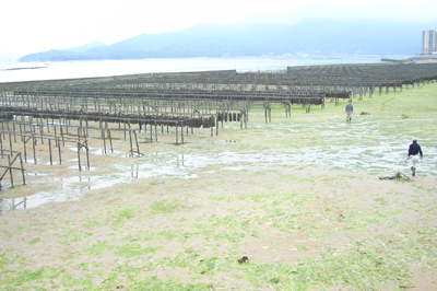 牡蠣の種付け場