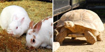 福岡市動植物園 ウサギとカメ?
