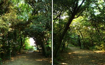高宮自然遊歩道 林の中で見るあっちとこっち