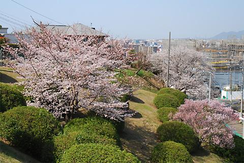 2012年桜@高宮浄水場