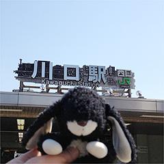 黒ウサ川口市に行く!