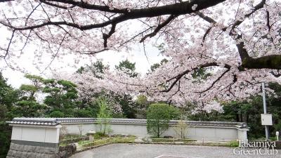 2016桜常光寺