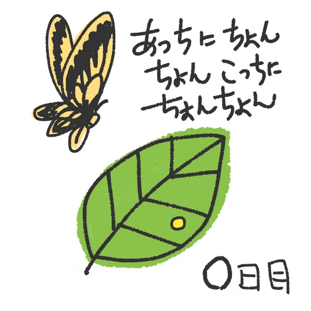 2017アゲハチョウ