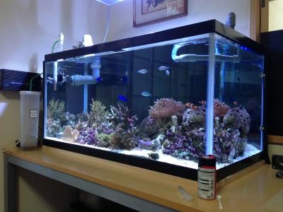 天然海水 海水水槽