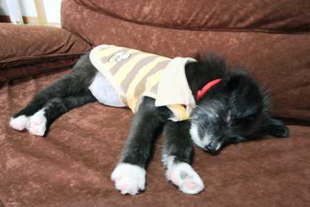 無防備に安心しきって寝ています。