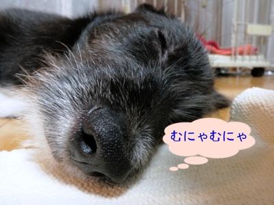 眠い眠いレギュ