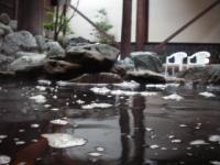 秋田阪神観戦8