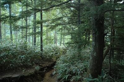 最初の山道