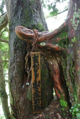 ちんちんの木