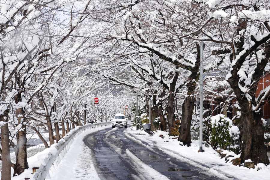 2015京都上賀茂雪景色02