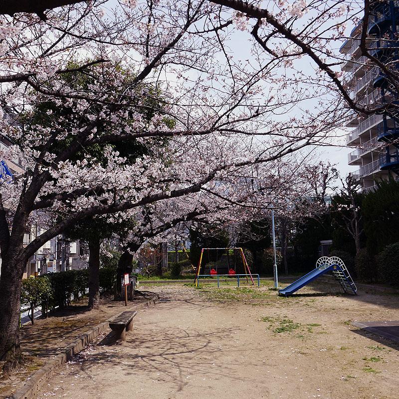 2019桜801.jpg