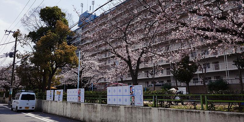 2019桜802.jpg
