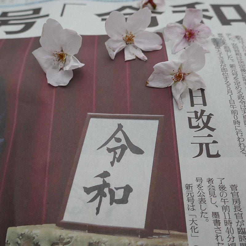 2019桜804.jpg