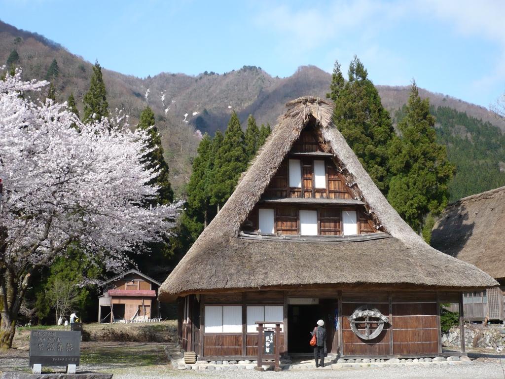 菅沼合掌造り集落の桜