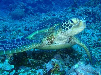 慶良間で沖縄ダイビング