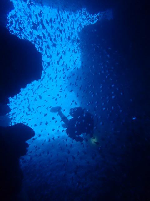 沖縄 ダイビング 12月