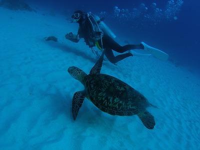 沖縄で体験ダイビングをしよう