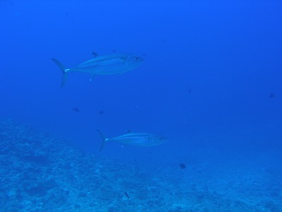 沖縄 ボートダイビング