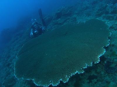 沖縄 ダイビング 体験