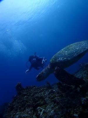 沖縄 ダイビング ベストシーズン おすすめ