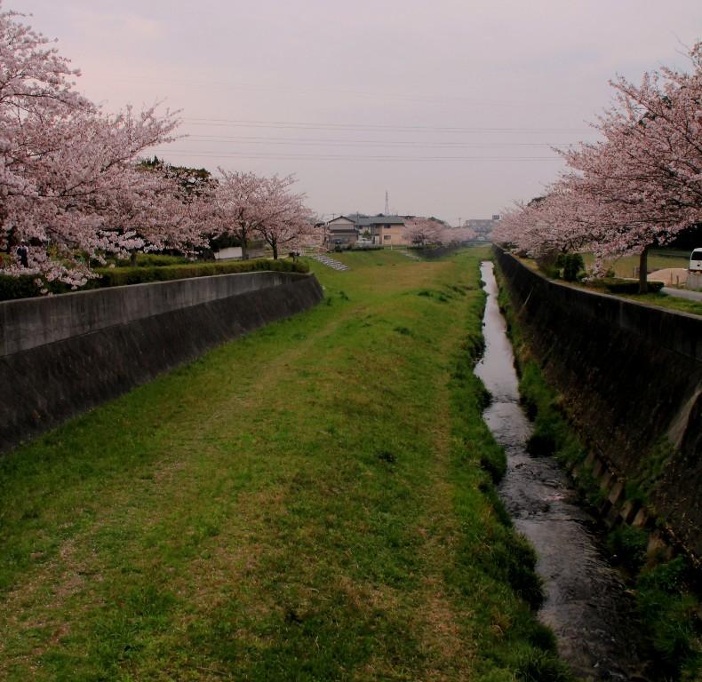 2012桜 bk054.jpg