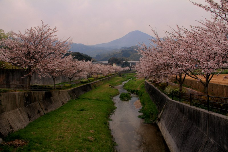 2012桜bk 077.jpg