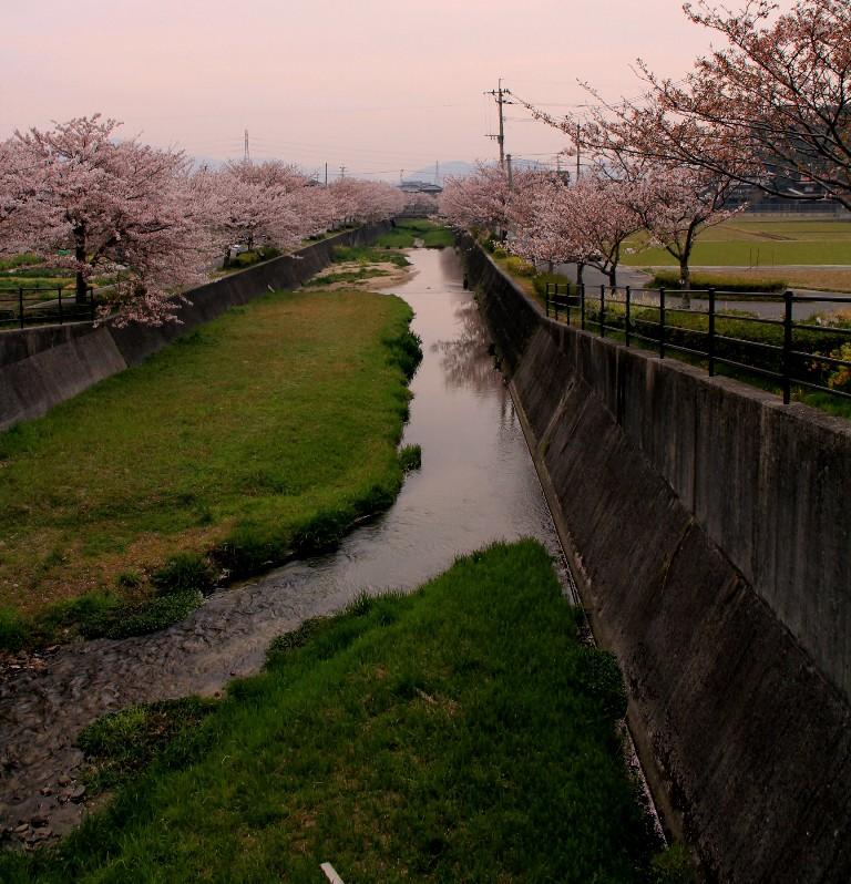 2012桜bk 082.jpg