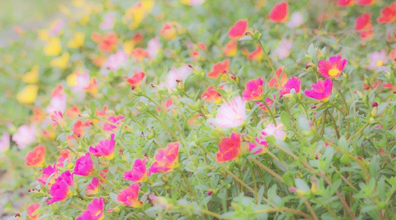 夏の終わり 2015-09-05 050.jpg