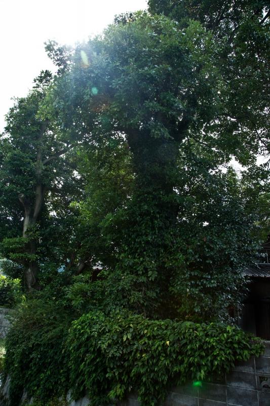 タブ伐採1bbk 2015-09-18 038.jpg