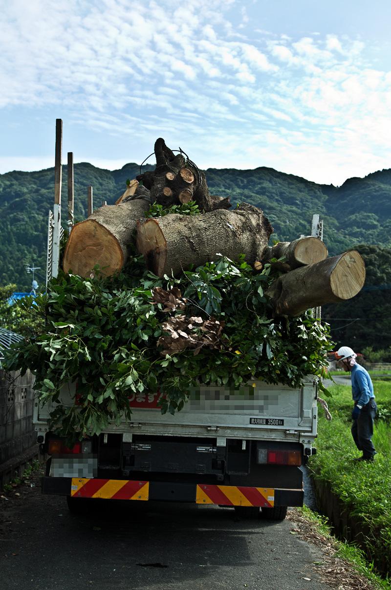 タブ伐採1bbk 2015-09-19 118.jpg