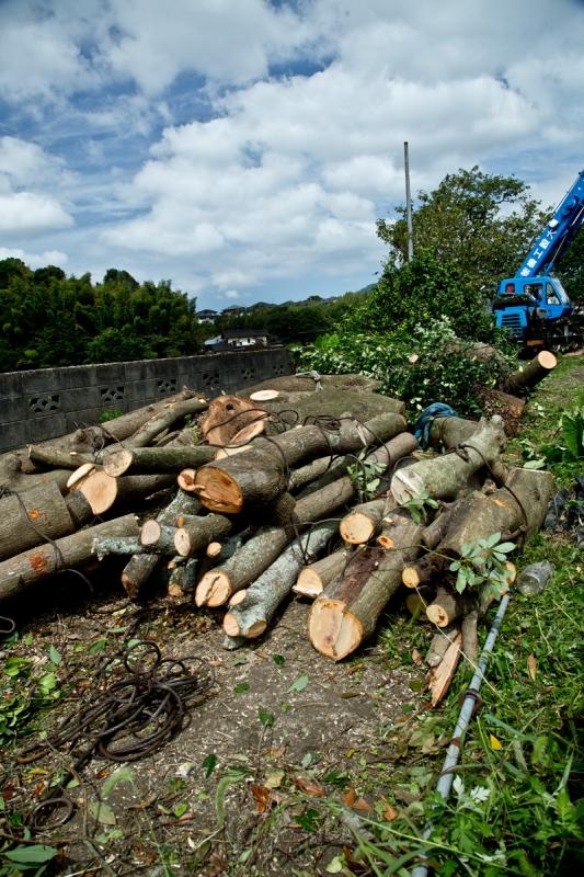 タブ伐採1bbk 2015-09-19 068.jpg